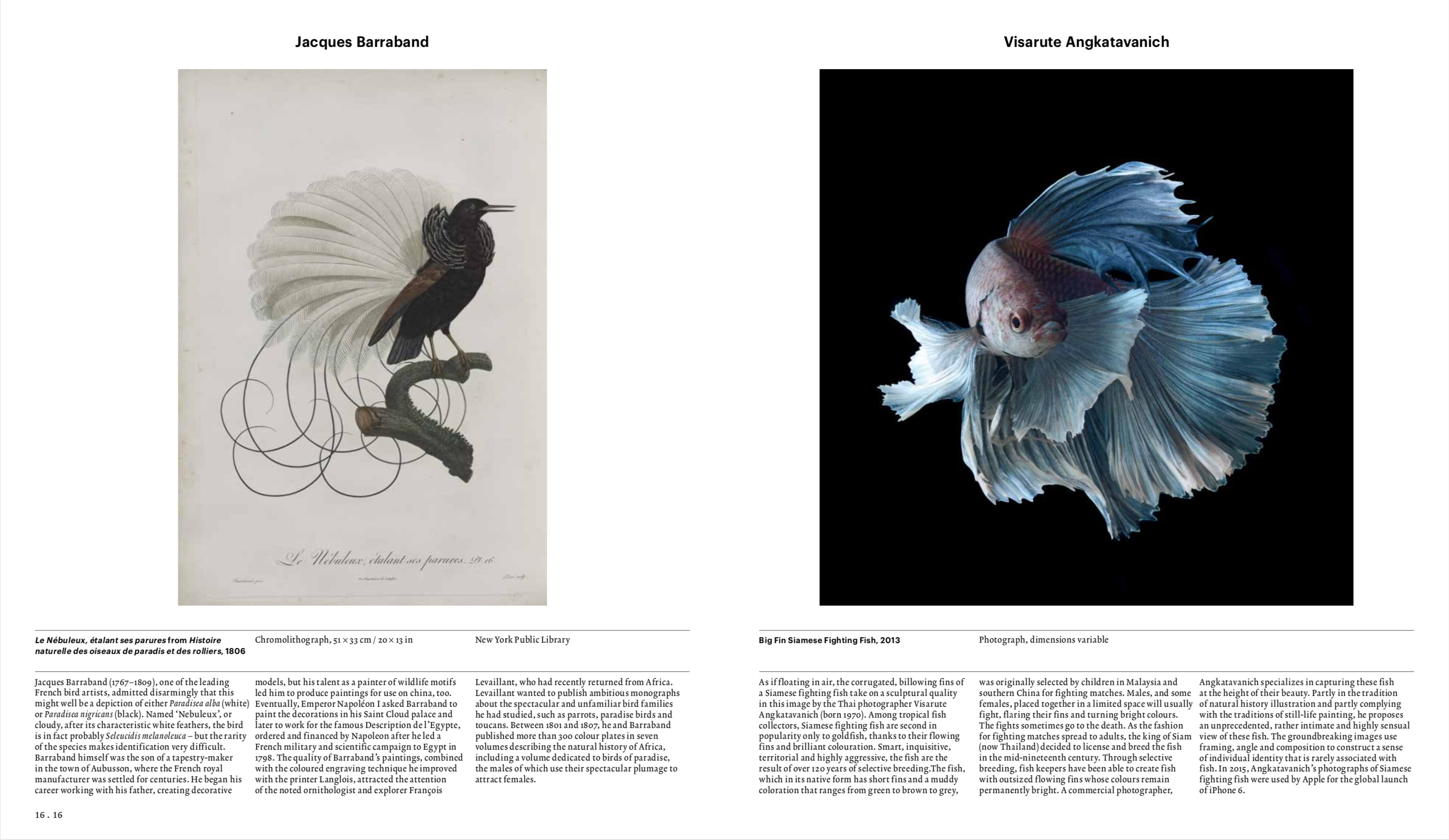 By James Hanken from Animal: Exploring the Zoological World copyright Phaidon 2018