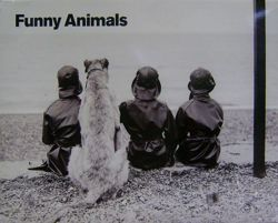 Funny Animals- 5 posters