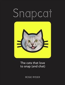 Snapcat : The cats who love to snap