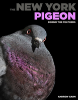 The New York Pigeon Behind the Feathers