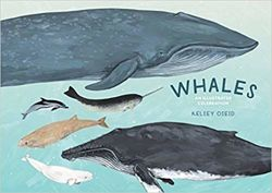 Whales : An Illustrated Celebration